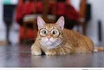 Pakolliset kissakuvat :) / Kissamainen tyyli silmälaseissa on aina IN !
