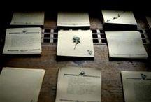 aiuole fast food / vegan cookbook with wild edible plants - herbarium + typewriter + paper boxes = handmade