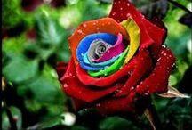 Rose Art / by CRA