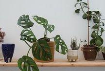 #3 plants