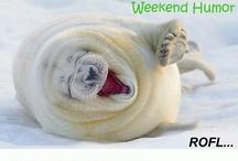 Weekend Humor / by Business Morphosis