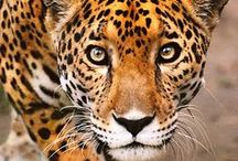 Animals - Wonderfully Wild / And.... God made them all.