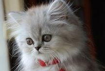 Animals - Cute Cats / In memory of........