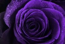 Colour - Purple / Rich, beautiful and royal