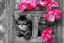 Black & White - Pop of Pink / A splash of the various shades of Pink on a Black and White Pic is stunning
