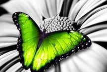 Black & White - Pop of Green / Green with the black and white is restful but vibrant and radiant