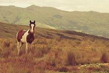 Horse pics ❤️