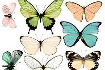 Botanik und Insekten