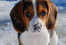 Animals - Delightful Dogs / Cute and gorgeous pictures of puppies and dogs - Man's best friend.