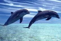 Animals - The Swimming Kind / God's creatures that grace our oceans
