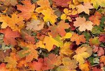 Awesome Nature - Autumn / The beauty, the awesomeness of nature in the world around us