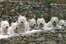 Westies / West-Highland White Terriers