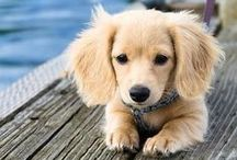 cute dogs that Renee wants