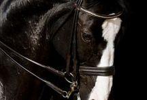 Amazing horses / Beautiful horses