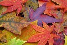 Autumn is sweet
