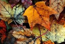 Autumn / The air gets crisp and cool, the leaves turn to amazing colors, and we all start getting cozy and warm... Fall is the best season of all!