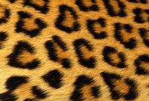 Leopard Print / All things leopard print, my favorite of the animal prints!