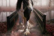 Gypsy Cobs / Beautiful horses