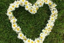 Hearts of Flowers / Heart shaped floral arangements and wreaths.