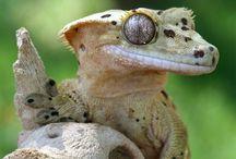 Cresties, Leachies & Gargoyles