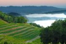 Wine Wisdom: Napa Valley / Facts about Napa Valley, California.