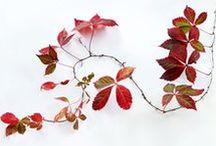 Art Theme - Autumn Love