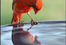 Nature - Reflection