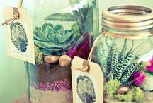 terrariums / indoor plants & terrariums