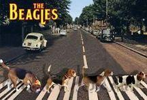 Beagle / A Beagle is........a Beagle!!! <3 <3 <3