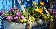 Rain gutters as flower container / Regengoot als plantenbak