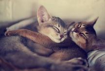 Cats / by Judy H. Morgan