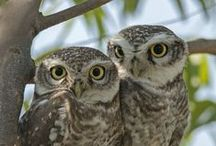 Owls / by Ariel the One