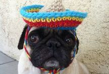 Cinco de Mayo - Fiesta Party Ideas on Pinterest / Festive party ideas from tissue paper pom decorations to party food and playlists to help make your May 5th fiesta a sure fire success.