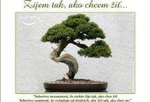 Múdrosti (Smeldo)