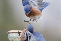Pássaros/ Birds