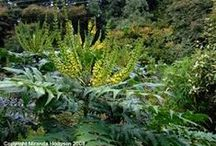 Shade Plants / Add some life to shady locations by adding colorful plants.