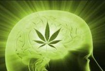 Konope / Kanabis / Cannabis (Smeldo) / ... rastlina budúcnosti.