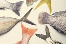 Fish Tail Photos & Drawings / fish tails