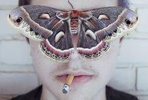 to flames / like moths