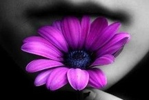 Passionate Purples / by lisa newcomb