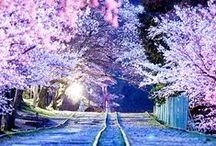 N.&-W-M.Sakura