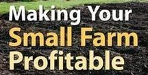 Homesteading Financial Tips / Collection of information about homesteading finanances.  You'll find information such as:  how to save money homesteading, making money homesteading, farming profits, profitable homesteading and more.