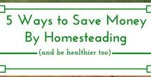 Homesteading For Everyone / Here you will find homesteading skills, tips, tricks to help you on your own homesteading journey.  Anything from real food recipes, gardening, food preservation, livestock, poultry can all be found here.  Email mranimalfarm@gmail.com to be added as a contributor.