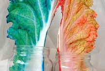 Science Ideas / by Kishori Chhotu