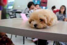 Puppy Love / by Trinity Warder