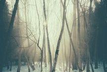 Wildish nature