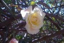 Minhas fotografias: Flores / Flores que amo.