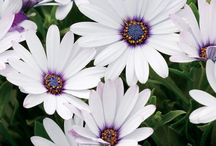 Jardinage / Dans ce tableau, vous trouverez des idées de montage de pots de fleurs, que se soit suspendue ou sur le bord d'une fenêtre.