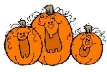 Pumpkin Theme / by Diane Fangmeyer
