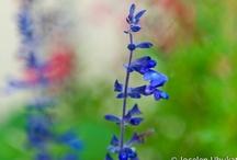 Foto & Arte / Um pouco de flores para alegrar a alma...rs